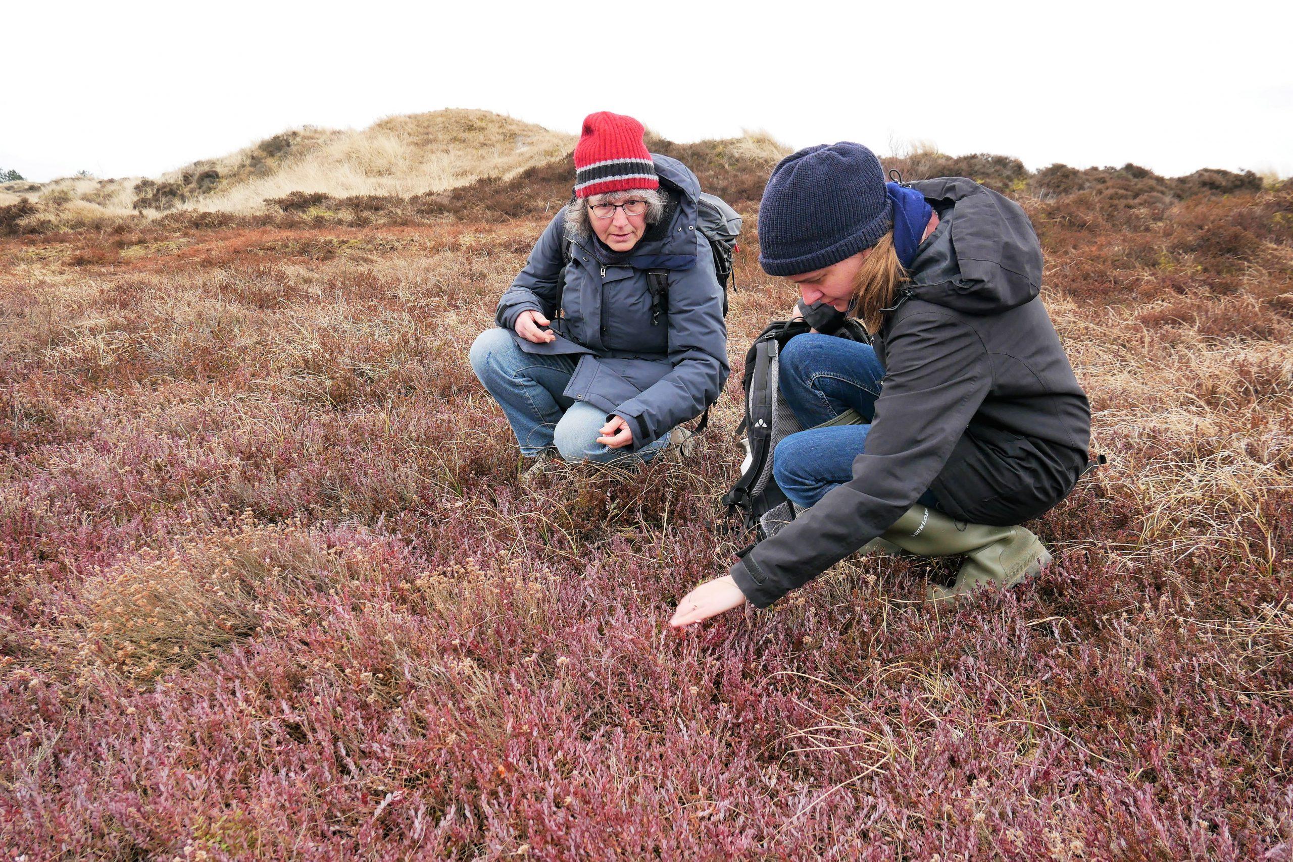 Monitoring von Pflanzen und Tieren im Projektgebiet