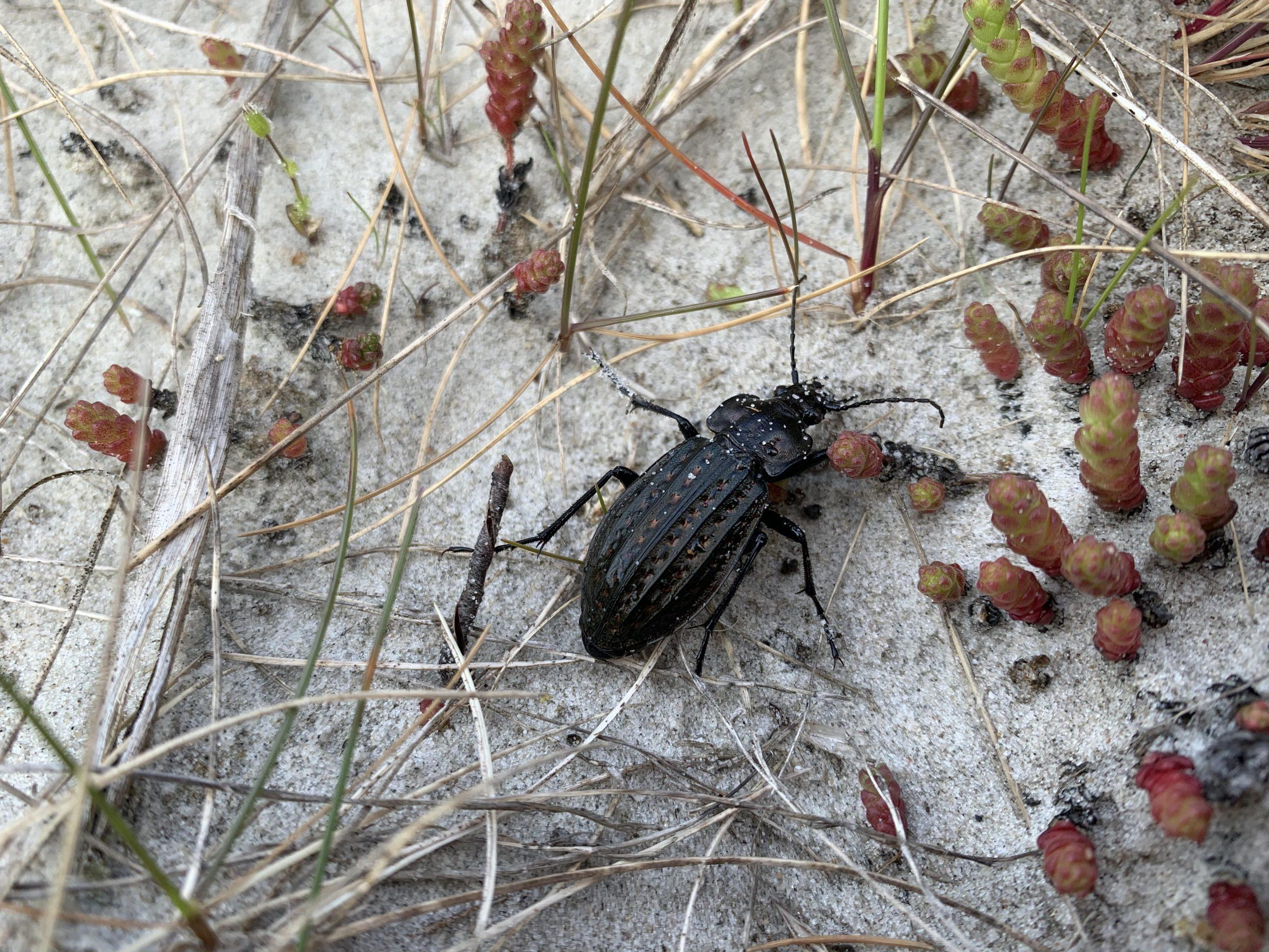 Einblicke in die Käferwelt